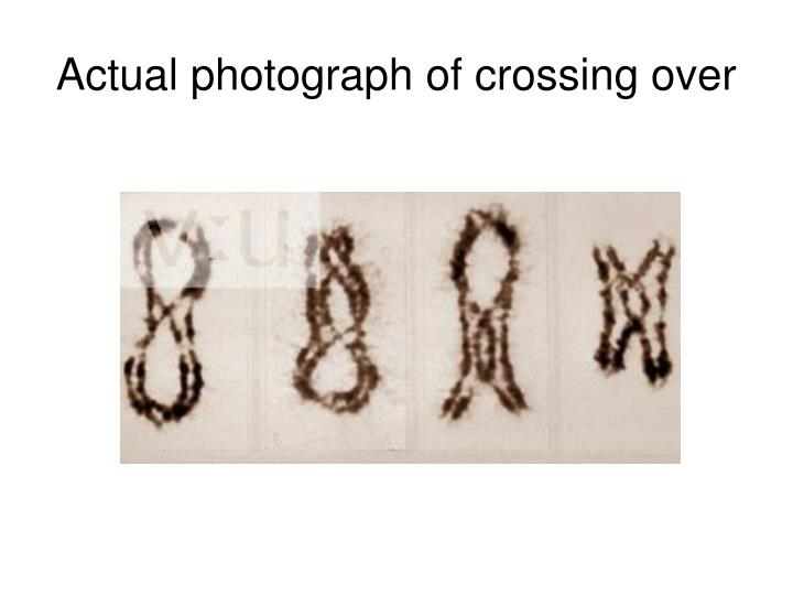 Actual photograph of crossing over