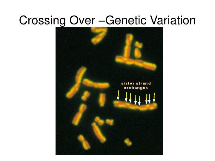 Crossing Over –Genetic Variation