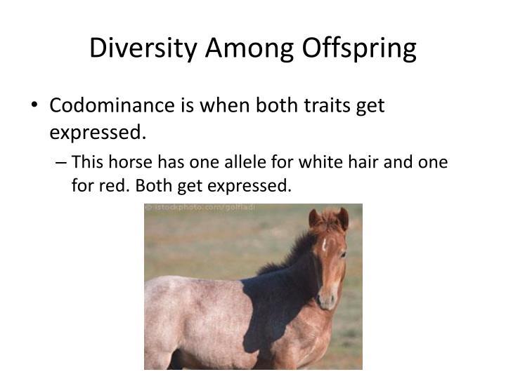 Diversity Among Offspring