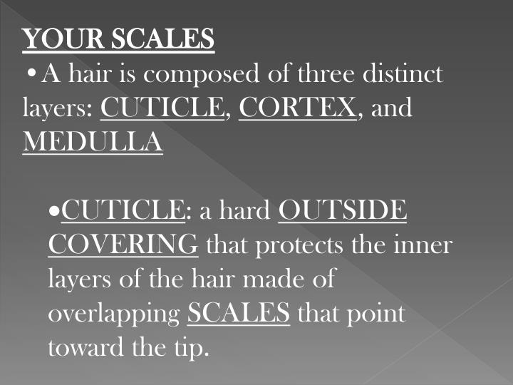 YOUR SCALES