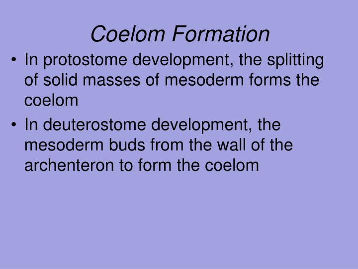 Coelom Formation