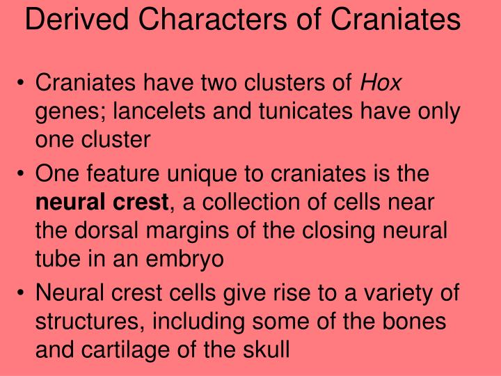 Derived Characters of Craniates