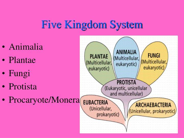 Kingdom Monera Examples