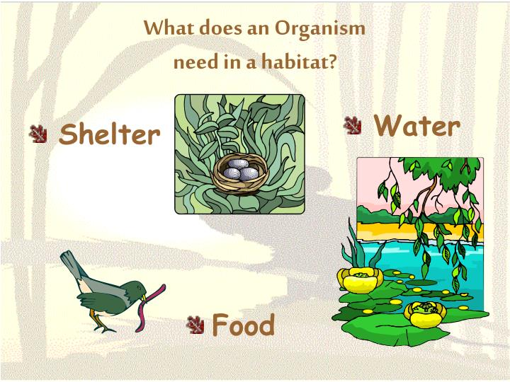 What does an organism need in a habitat