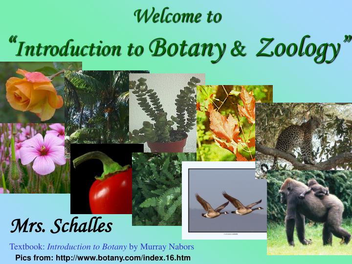 Ppt welcome to introduction to botany amp zoology welcome to introduction to botany zoology toneelgroepblik Images