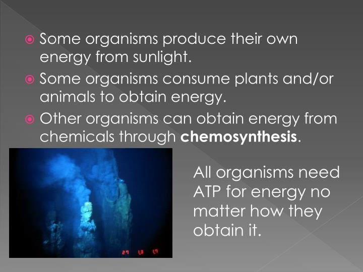 places where chemosynthesis occurs Tragedy of the commons refers to an economic problem in which every individual the tragedy of the commons occurs when individuals neglect the well-being of.