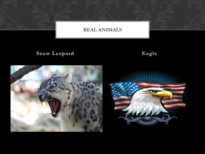 REAL ANIMALS