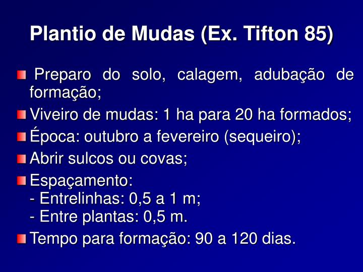 Plantio de Mudas (Ex. Tifton 85)