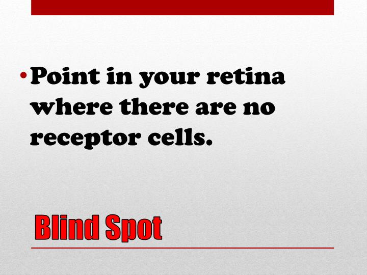 Point in your retina where there are no receptor cells.