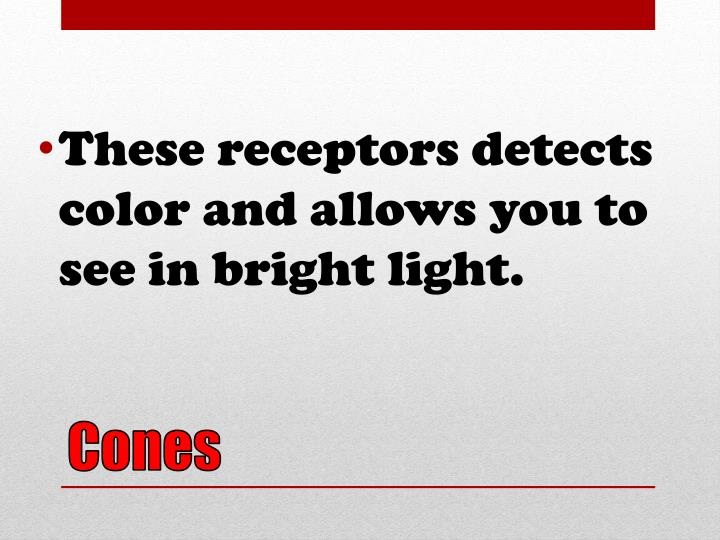 These receptors detects color and allows you to see in bright light.