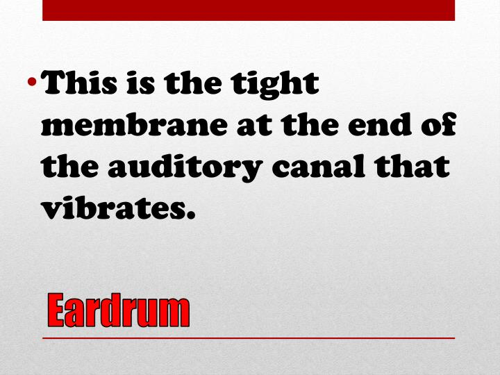 This is the tight membrane at the end of the auditory canal that vibrates.