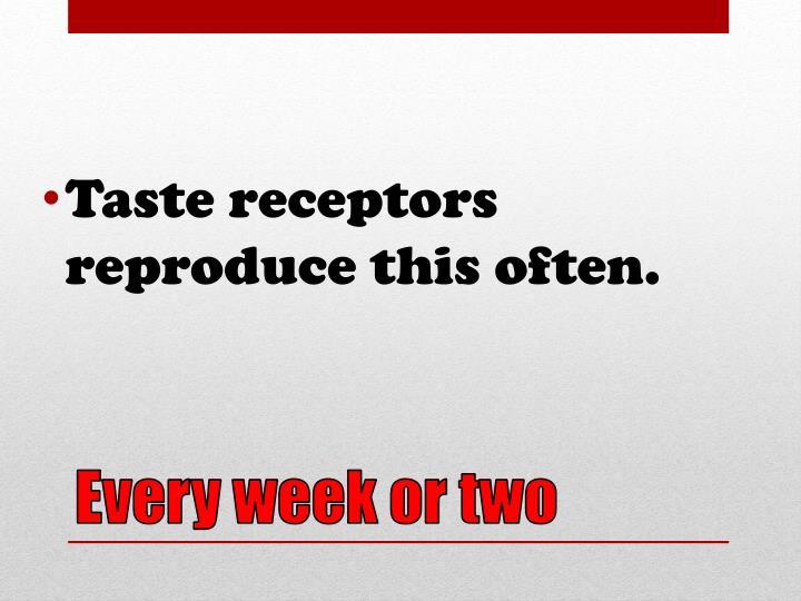Taste receptors reproduce this often.