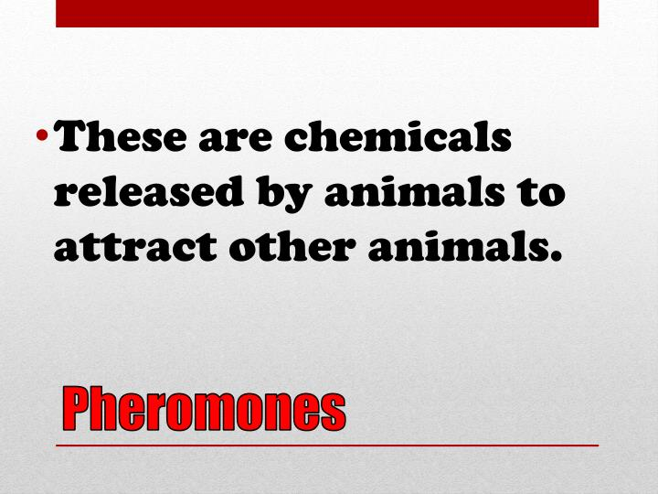These are chemicals released by animals to attract other animals.