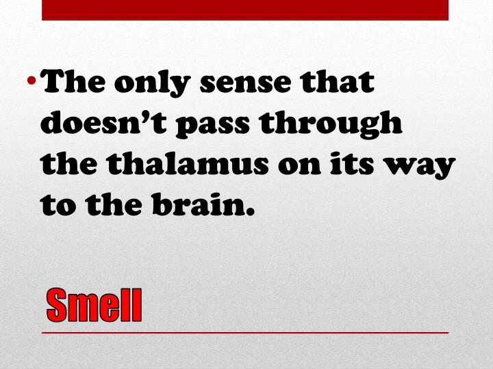 The only sense that doesn't pass through the thalamus on its way to the brain.