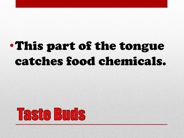 This part of the tongue catches food chemicals.