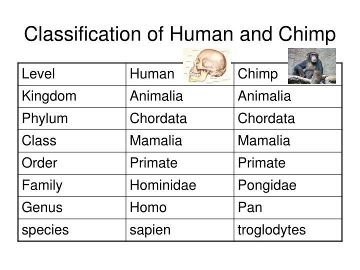Chimpanzee Taxonomy PPT - Chapter 1...
