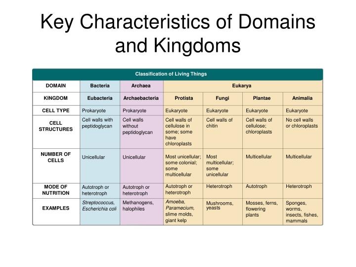 important features of the kingdom of The 4 features of the most important fungi kingdom by ruth bednar posted on march 06, 2016 the characteristic of the fungi kingdom or kingdom of the most outstanding fungi, is that they are multicellular eukaryotes, which were believed to belong to the plant kingdom.
