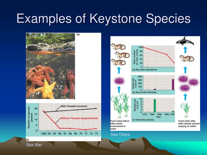 PPT - Chapter 53 – Community Ecology PowerPoint Presentation - ID ...