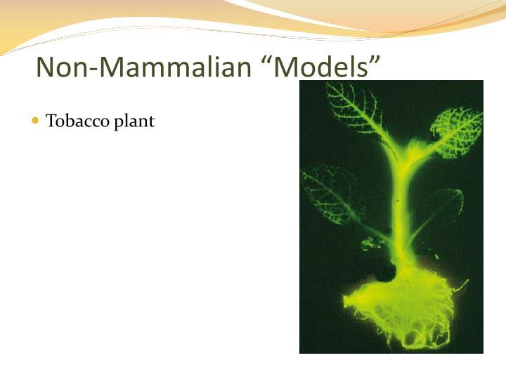 "Non-Mammalian ""Models"""