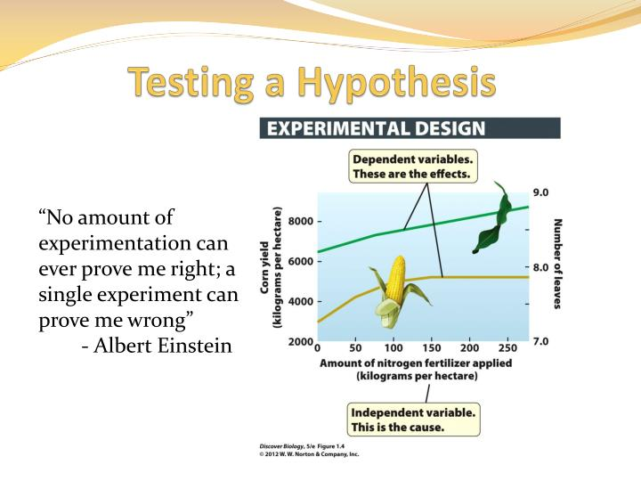 Testing a Hypothesis