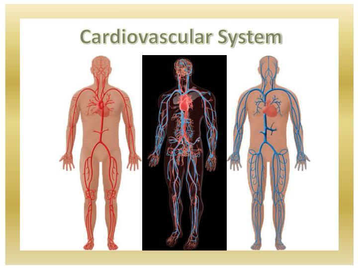 Cardiovascular system2