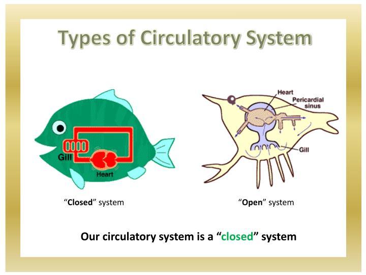 Types of Circulatory System