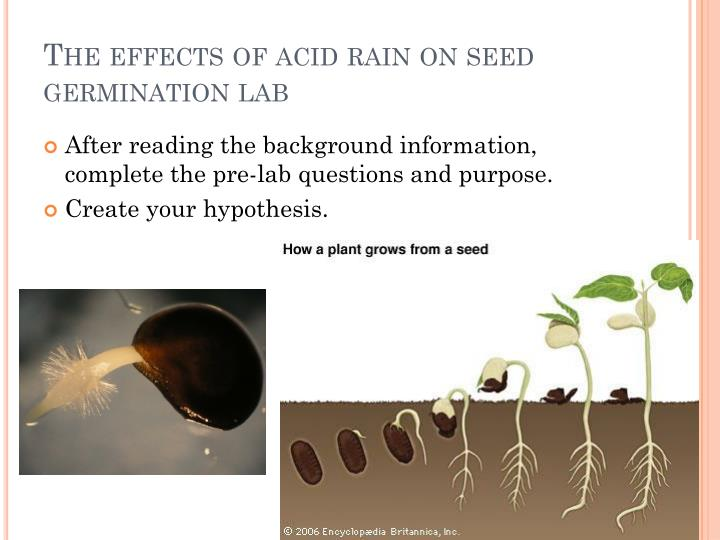 mercury effect on seed germination How does a seed germinate one of the fascinating stages of a plant life cycle is germinationmost of us have planted seeds in the ground, watered them and watch seedlings emerge through the soil to being a new cycle in the spiral of life.