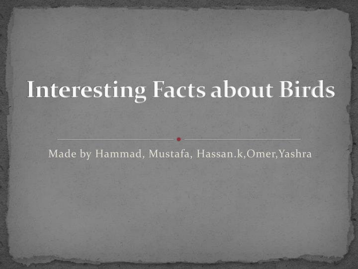 interesting facts about birds n.