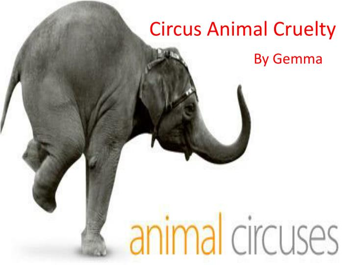 circus cruelty essays Circus is a good mean of entertainment in the past, circus shows were very popular young and old, men, women and children, all liked to enjoy a circus show but now the cinema has pushed the circus in to the background children alone now like to visit a circus the circus owner move from place to.