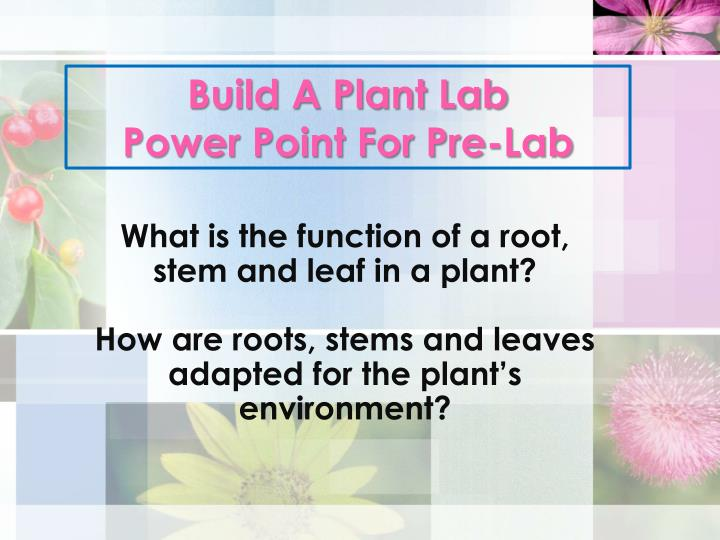 build a plant lab power point for pre lab n.