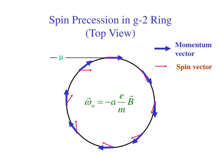 Spin Precession in g-2 Ring