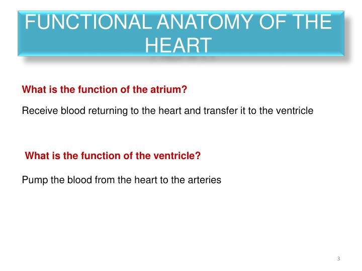 PPT - Physiology Tutorial PowerPoint Presentation - ID:2791615