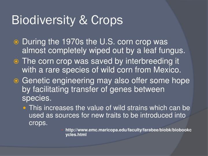 Biodiversity & Crops