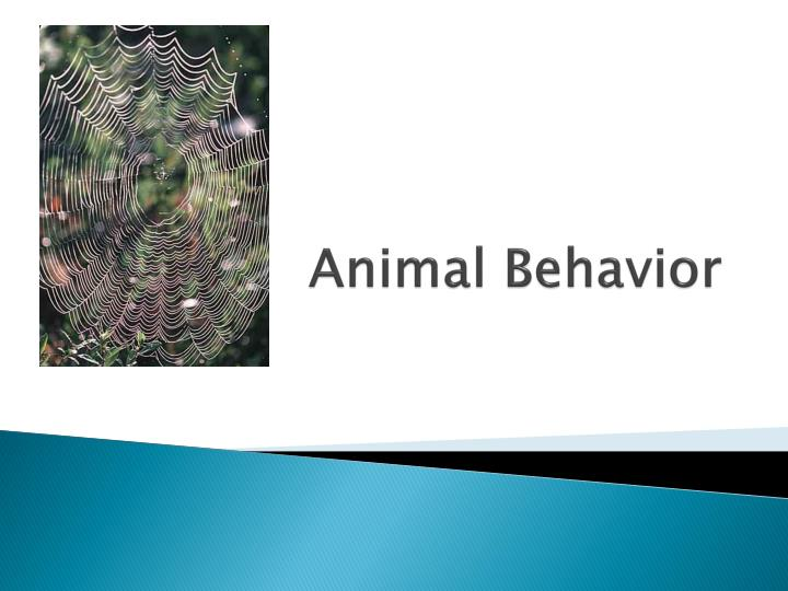 animal behavior presentation copy Internet of animals - in this presentation we will take a look at how the internet of things is changing the way we interact with the animals in this post we see the mobile apps that connect with internet and track yours lost animals, health patterns, sick cattle and your animal's behaviour.