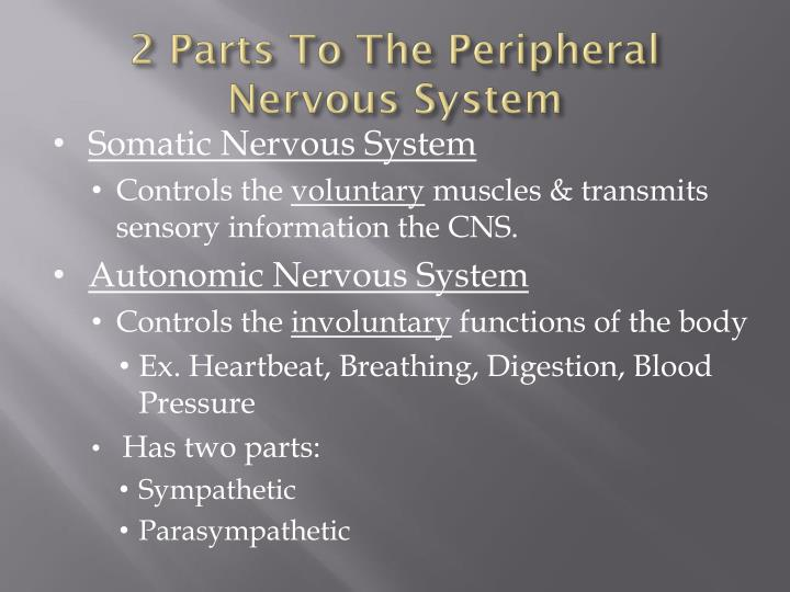 2 Parts To The Peripheral Nervous System