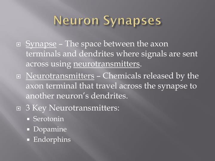 Neuron Synapses
