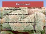 efecto renal