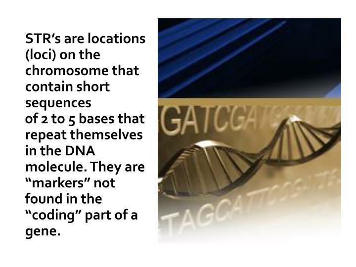STR's are locations (loci) on the chromosome that contain short sequences