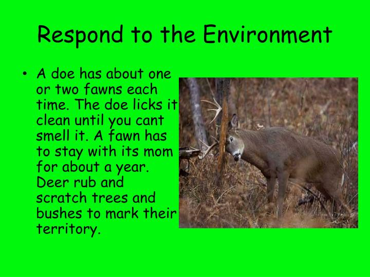 Respond to the Environment