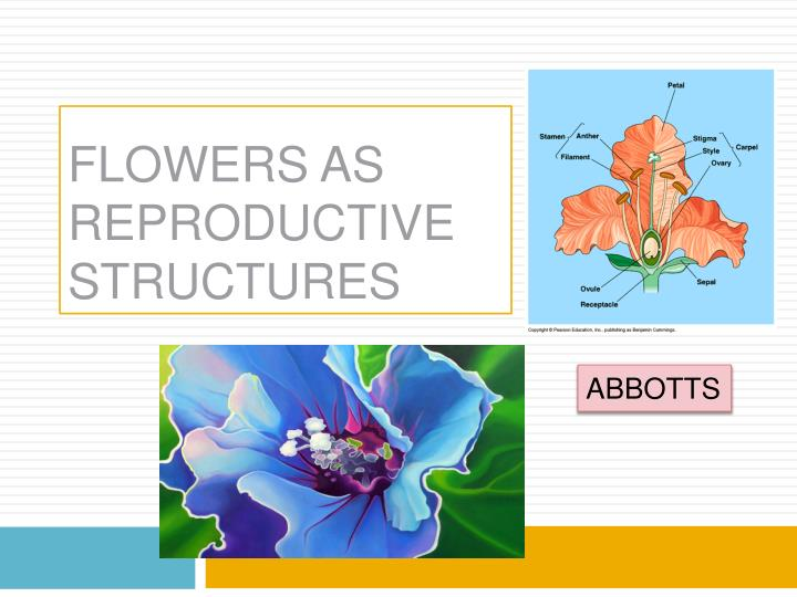 flowers as reproductive structures n.