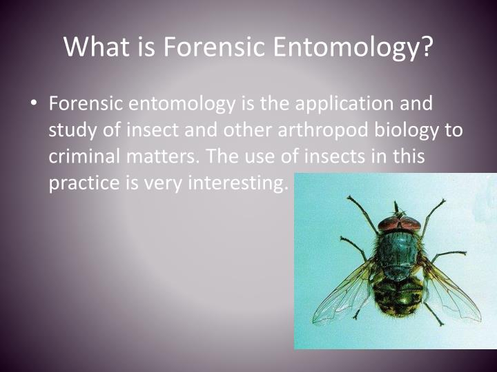 the study of forensic entomology biology essay Entomology is the branch of zoology that deals with the study of insects which includes their classification, morphology, histology, anatomy and physiology.