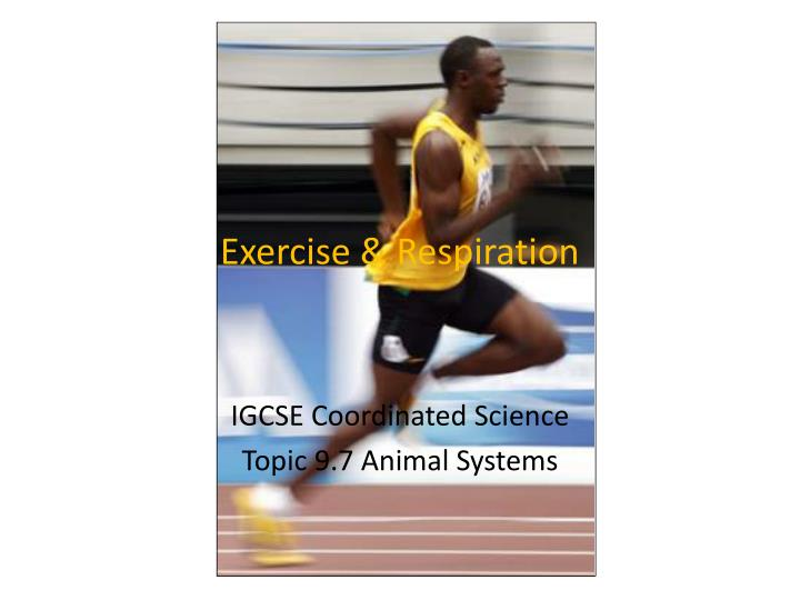 exercise respiration n.