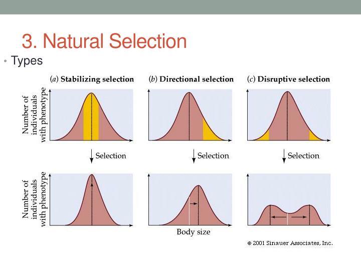 3. Natural Selection