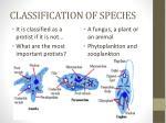 classification of species9