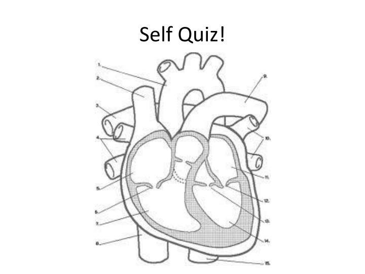 Self Quiz!