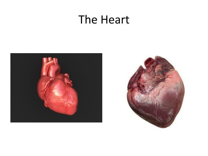 The heart1