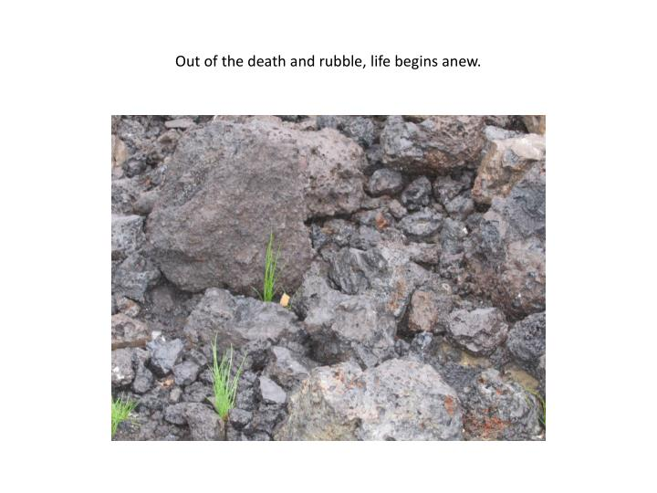 Out of the death and rubble, life begins anew.