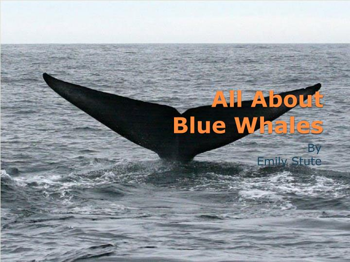 all about blue whales n.