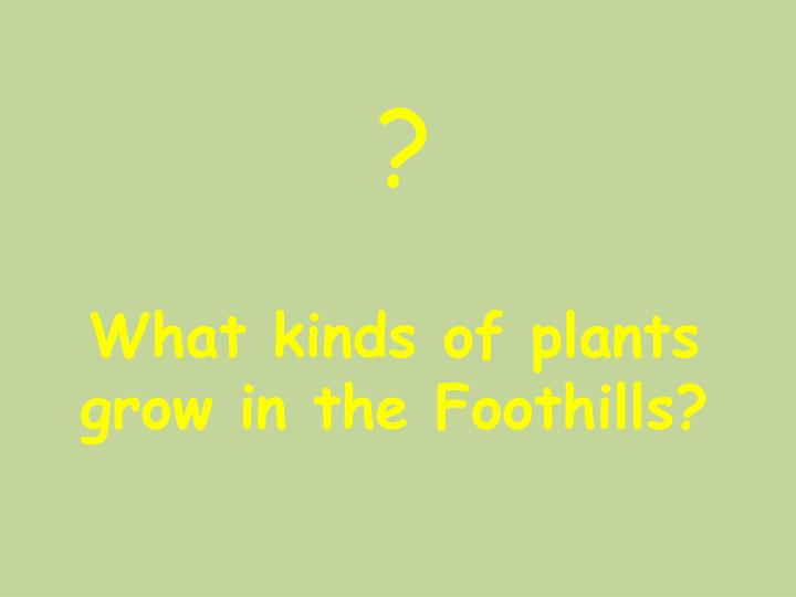 What kinds of plants grow in the Foothills?