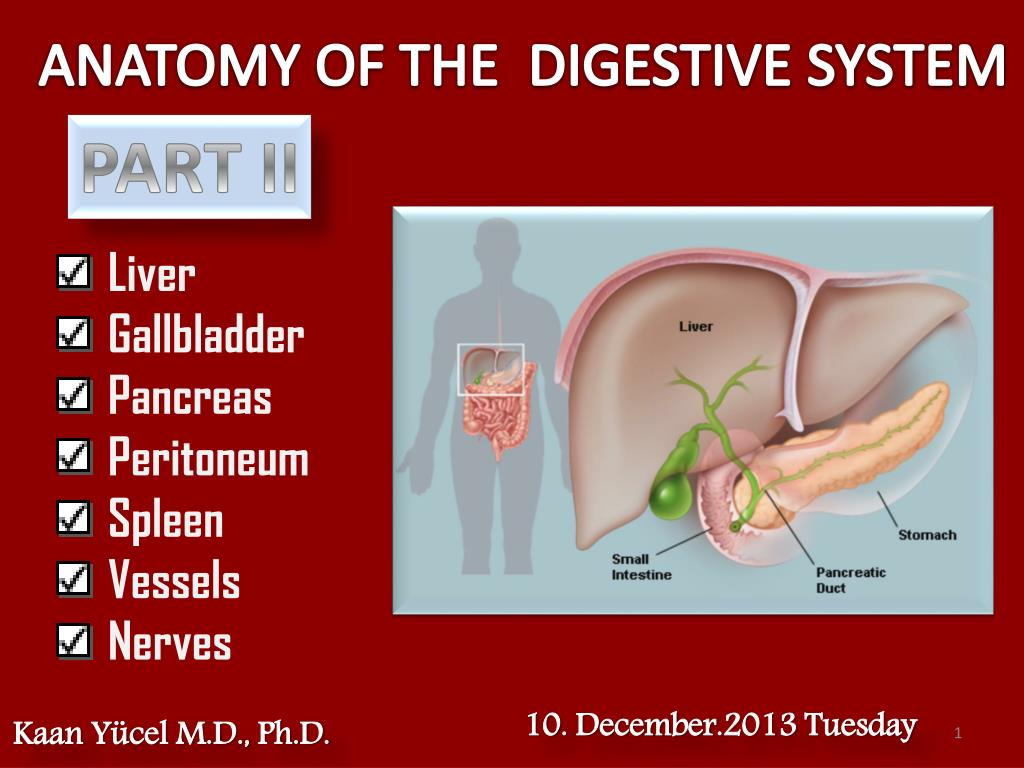 Ppt Anatomy Of The Digestive System Powerpoint Presentation Id